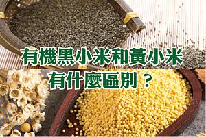 黑小米和黃小米有什麼區別?