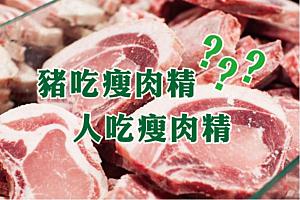 豬吃瘦肉精,人吃瘦肉精