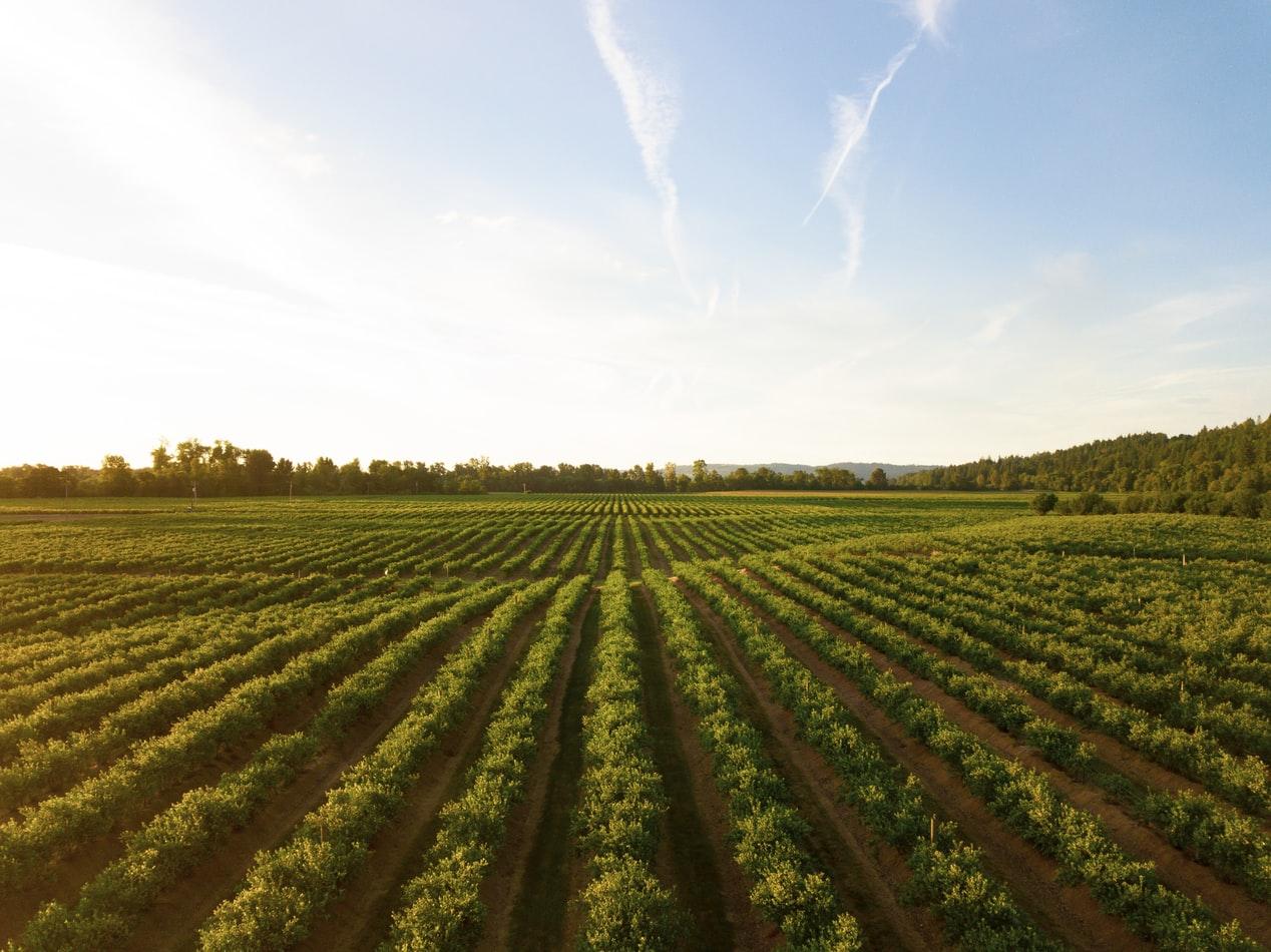 有機耕種 organic farm